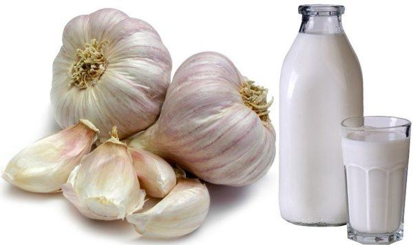 Молоко з часником: користь і шкода, рецепти від кашлю і глистів