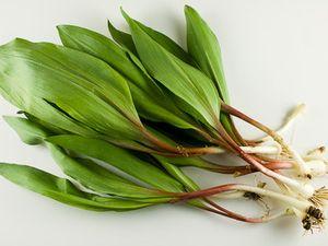 Черемша: користь і шкода свіжого і маринованого рослини