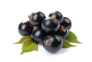 Чорна смородина: корисні властивості, протипоказання, лист смородини