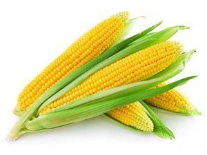 Калорійність кукурудзи: консервованої, вареної в качанах
