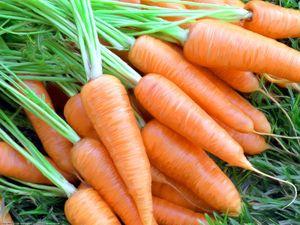 Калорійність моркви на 100 грам: сирої, по-корейськи