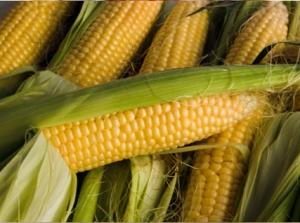 Корисні властивості кукурудзи та продуктів з її застосуванням