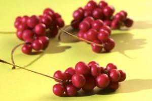 Корисні властивості лимонника в кулінарії і медицині