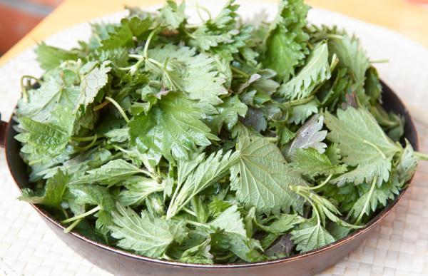 Салат з кропиви: покрокові рецепти, корисні поради